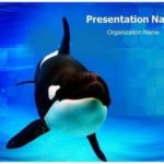 68 Best Killer Powerpoint Templates by Pics